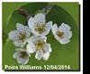 Vign_2014-0413-poires-0566