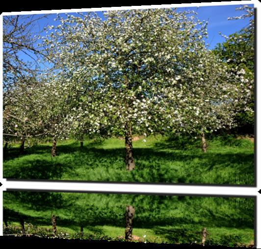 Vign_2014-0516--pommes-0891