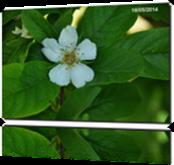 Vign_2014-0518-0072