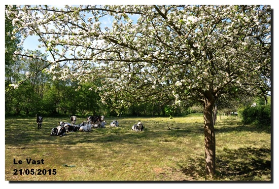 Vign_2015-05-21-1004