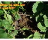 Vign_2017-08-11-1163