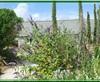 Vign_jardin-180